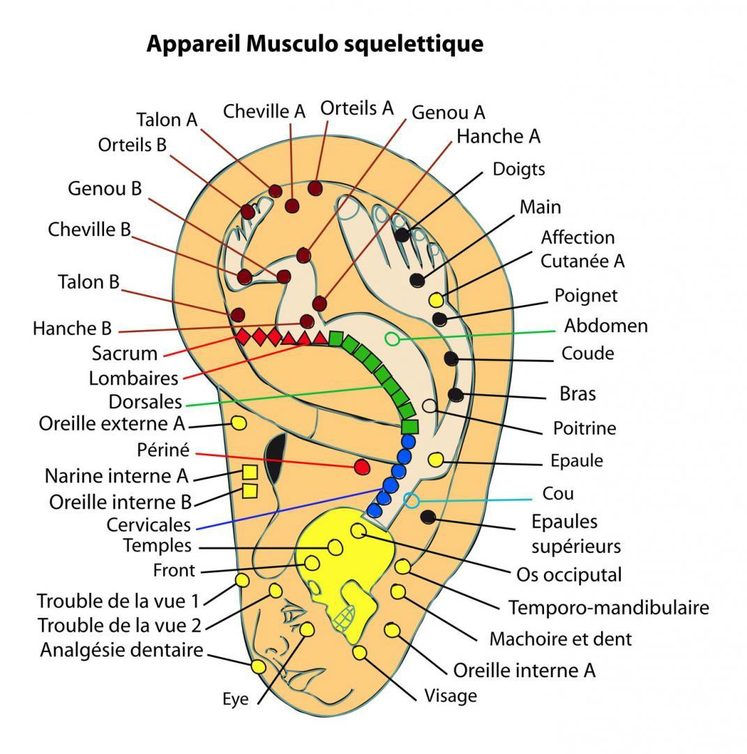 carte auriculothérapie