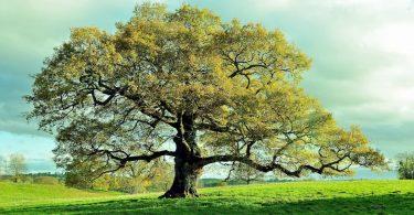 créer un arbre généalogique