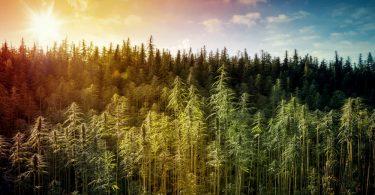 Astragale Plante : Bon de réduction - Qualité - Indications |  Quels sont les bénéfices